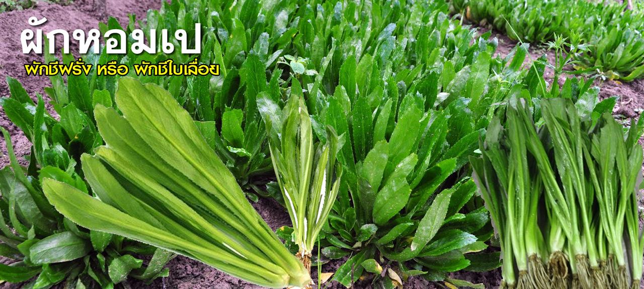 อาหารการเจริญเติบโตของเต้านมภาษาฮินดี