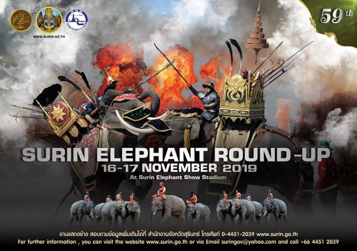 surin elephant round up2019 01