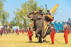 surin elephant round up2019 02